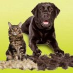A Few Tips for Dealing With Shedding Pets