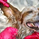 Why Taking Your Pet to a Professional Groomer Is Important