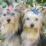 The Importance of Keeping Your Pets Groomed