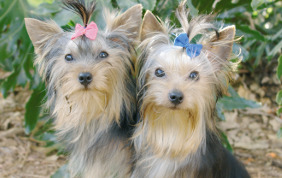 Lucky Dawg Dog Grooming and Cat Grooming Image