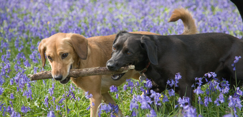 Simple Tips for Keeping Dogs Healthy