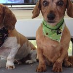 How to Keep Pets Healthier and Happier With Regular Grooming