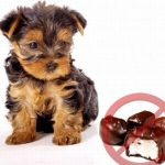 3 Foods That Are Harmful To Dogs