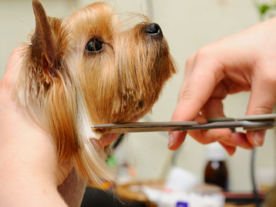 The Importance of Hiring Professional Pet Grooming Services