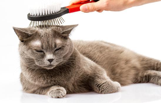 Pet Grooming Why Cats Should Be Visiting The Salon Too