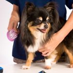 The Many Benefits of Pet Grooming