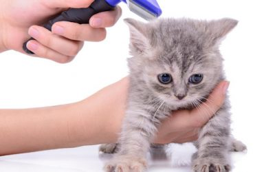 Cat Grooming: Everything You Have Been Curious About