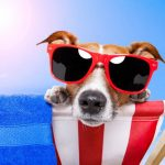 Ways to Keep Your Dog Active in the Summer