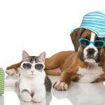 How To Keep Cats And Dogs Cool On Hot, Summer Days