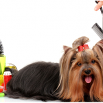 Benefits of Professional Pet Grooming Services