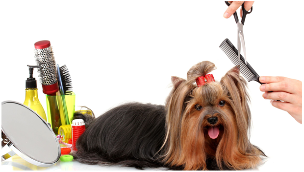 Lucky Dog Pet Grooming
