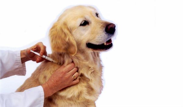 Pet Immunizations: Investing in Pet Health