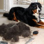 Professional Pet Grooming Services for Your Pet