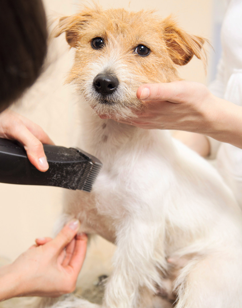 Pet grooming gallery lucky dawg salon grooming in california pet grooming salon torrance solutioingenieria Gallery