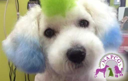 Pet Grooming Salon Torrance