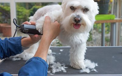 3 Convenient Benefits of Mobile Dog Grooming