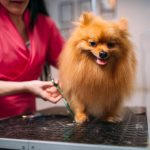 4 Reasons Why Pet Owners Should Regularly Use Groomers