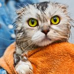 Grooming Cats: It's Not Just for Canines
