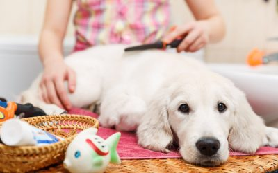 3 Top Dog Grooming Mistakes to Avoid