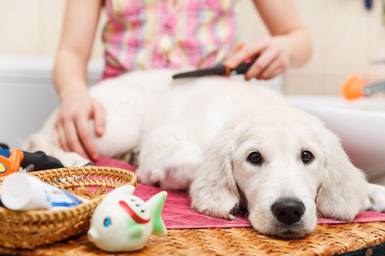 Dog Grooming in Torrance