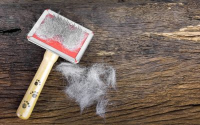How to Manage Cat Shedding