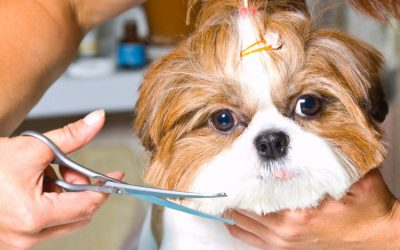 How to Choose the Best Dog Haircut for Your Pup