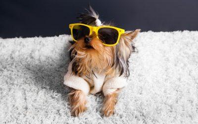 5 Ways Regular Pet Grooming Keeps Your Pet Healthy