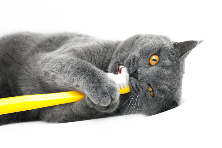 Cat Teeth Cleaning Tips and Tricks