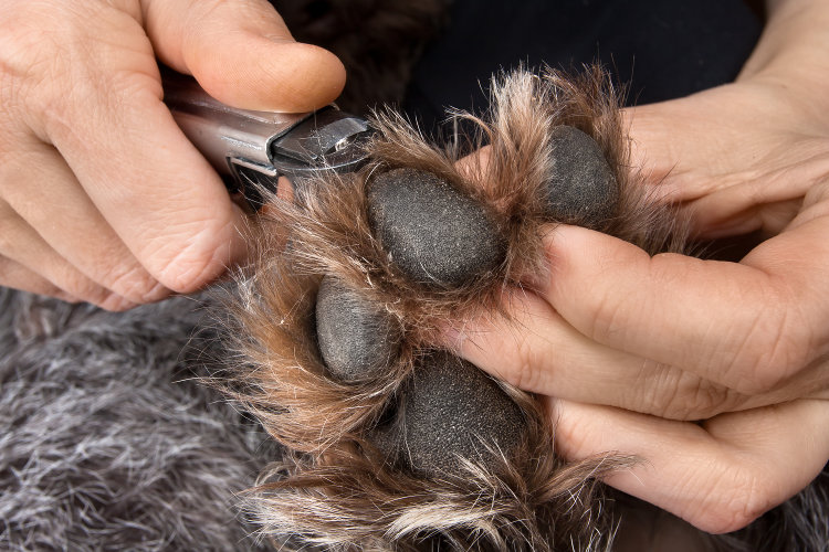 Why Regular Dog Nail Clipping is So Important