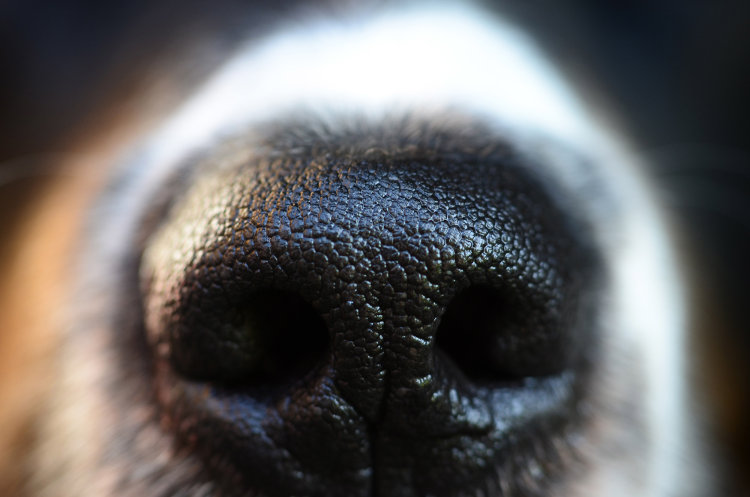 dog odor remedies
