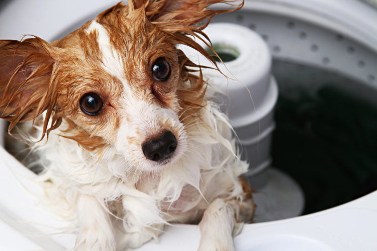 5 Tips for Dog Grooming at Home