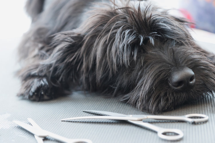 Mobile Pet Grooming: The Pros and Cons
