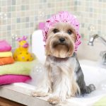 5 Pieces of Advice on How to Groom a Dog