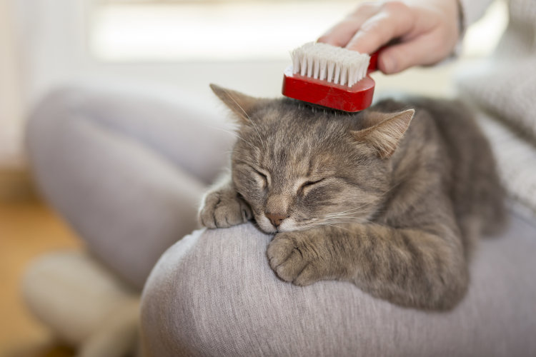 The Right (and Wrong) Ways to Brush Your Cat