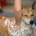 Dog Grooming Tips for Avoiding Mishaps