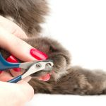 Why You Need to Trim Your Cat's Nails Too