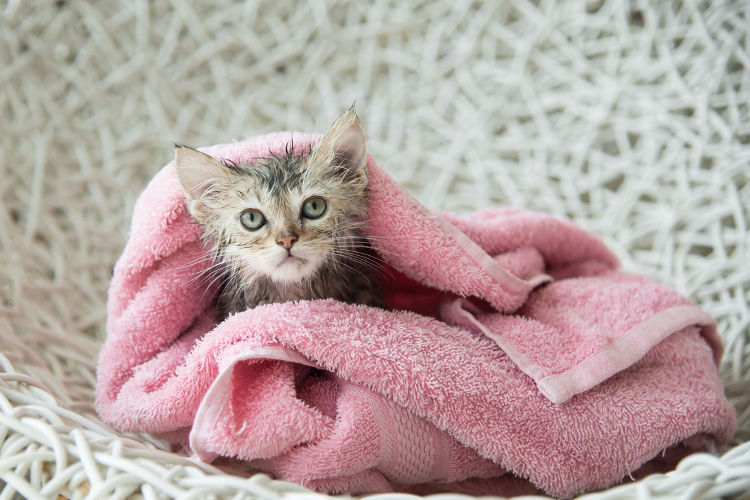 The Ultimate Guide on How to Bathe a Kitten