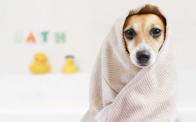5 Reasons You Should Always Use Dog Shampoo for Your Dog
