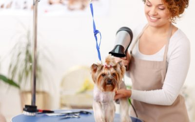 What Can Mobile Pet Grooming Do For You?