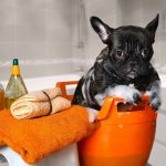 A Step by Step Guide for your Puppy's First Bath