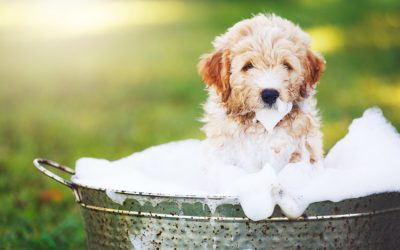 How To Bathe Dogs With Sensitive Skin