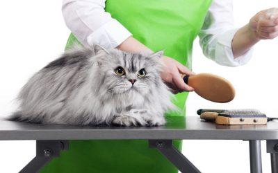 7 Great Benefits of Cat Grooming