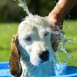 The Top 5 Mistakes Owners Make When Washing A Dog
