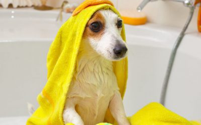 How To Choose The Best Dog Grooming Products For Your Pooch