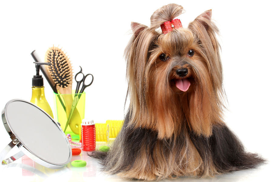 DOG GROOMING TOOLS