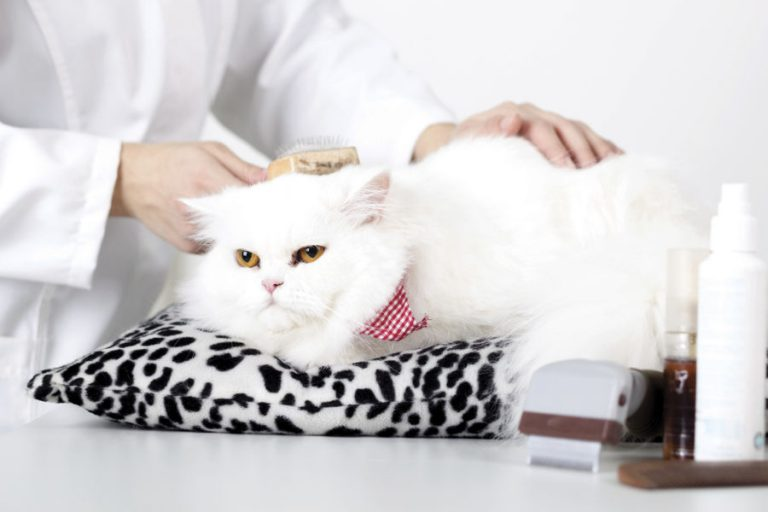 SALON CAT GROOMING