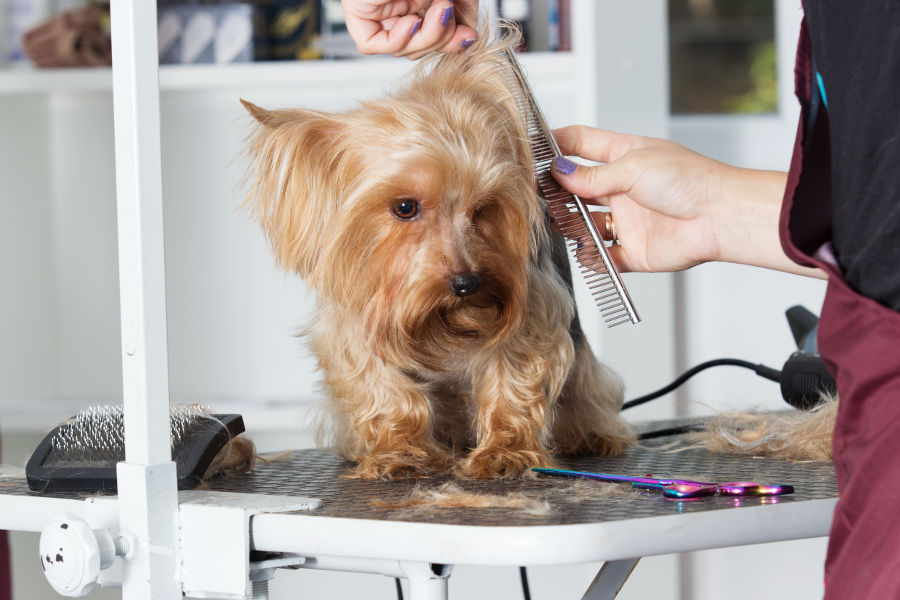 The Perks Of Mobile Dog Grooming For Your Furry Best Friend