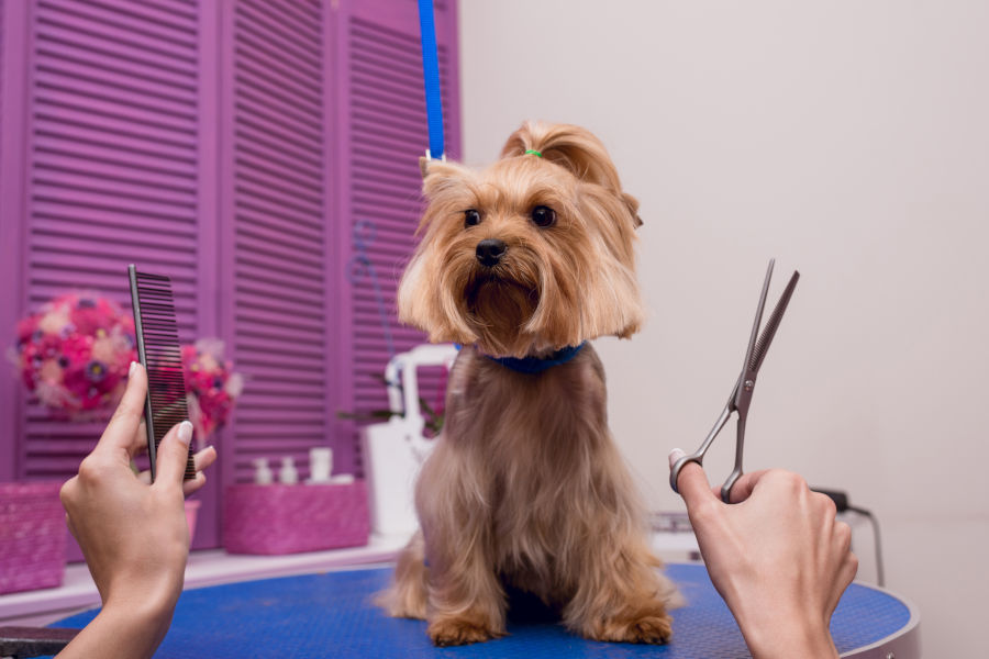 Why Pet Owners Need A Professional Groomer