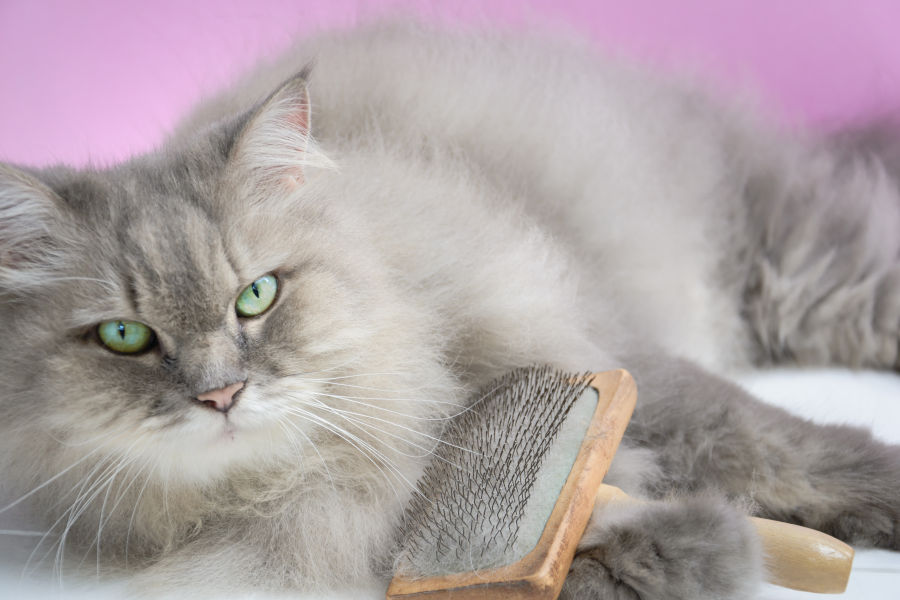Does My Cat Really Need To Be Groomed By A Professional?