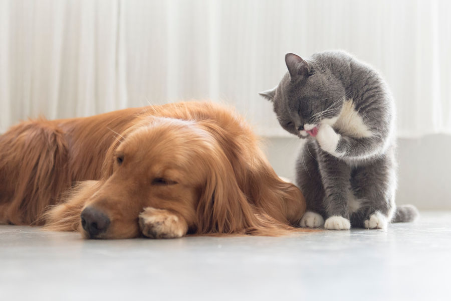 Pet Grooming: All The Benefits & Perks